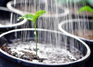 7 Kesilapan Yang Mungkin Anda Lakukan Di Kebun