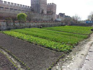 Bostans, tapak tanaman kebun bandar di Turki.