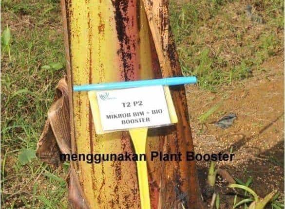 Cara-cara Buat Plant Booster Organik Di Rumah 4