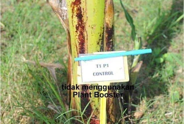 Cara-cara Buat Plant Booster Organik Di Rumah 5
