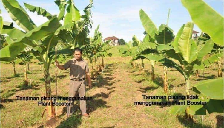 Cara-cara Buat Plant Booster Organik Di Rumah 1
